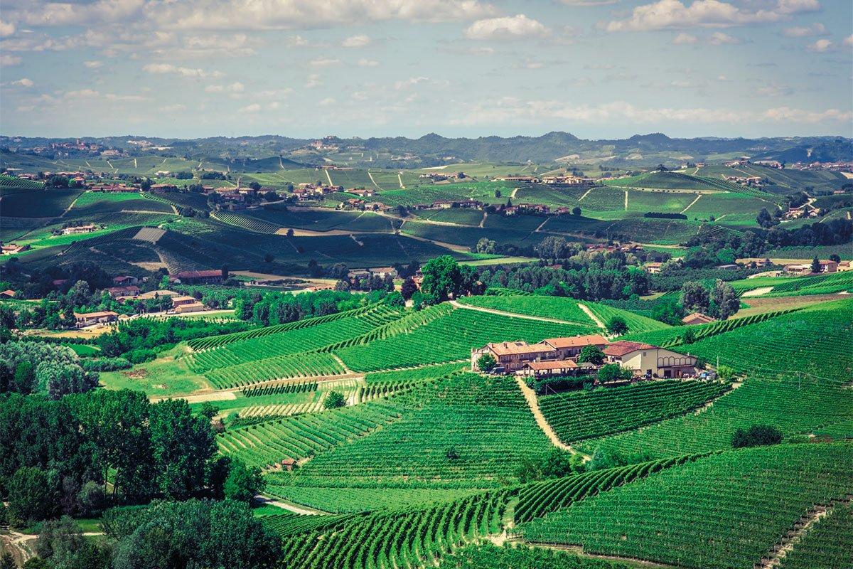 Franco Conterno | The vineyards