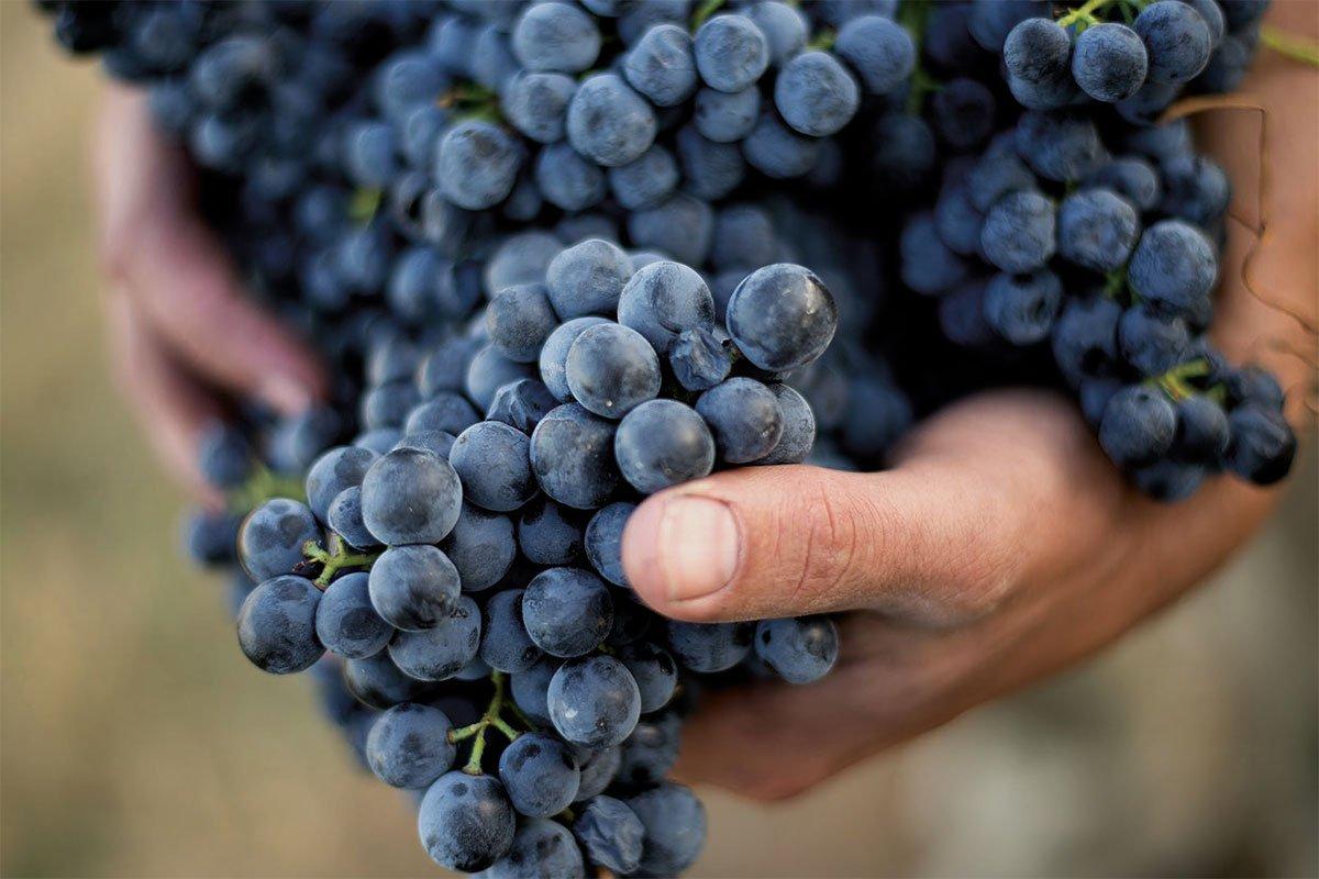 Franco Conterno | Organic Certification